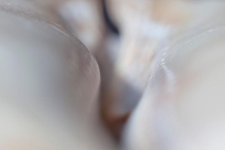 exos-jilija-goyd